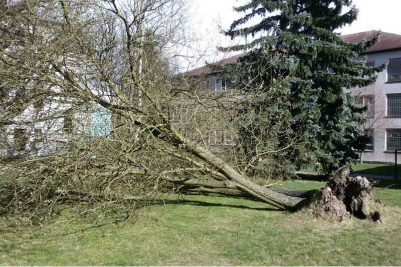 Vítr vyvrátil strom také v DDM Bludiště. Foto: Petr Karbulka