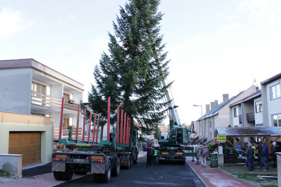 Přeprava vánočního stromu do Karlových Varů. Foto: Martin Polák