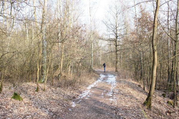 Lesopark v těchto dnech. Foto: Martin Polák